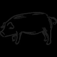 Cual es mi Horóscopo Chino Cerdo Brush Negro