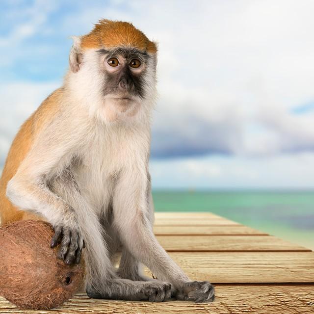 El mono en el Horóscopo Chino
