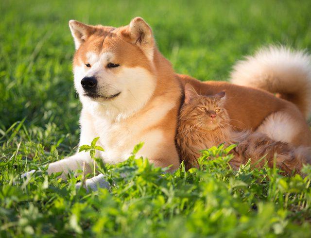 Ejemplo de perro que representa el signo del horóscopo chino