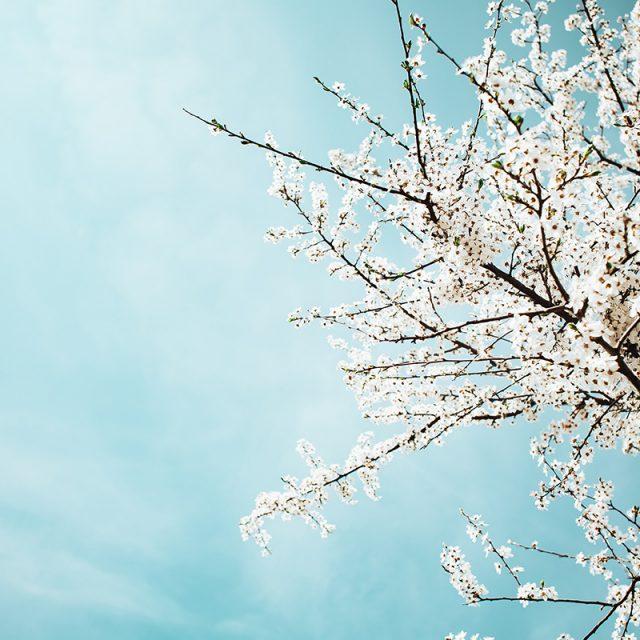 La primavera Lap Chum 2019